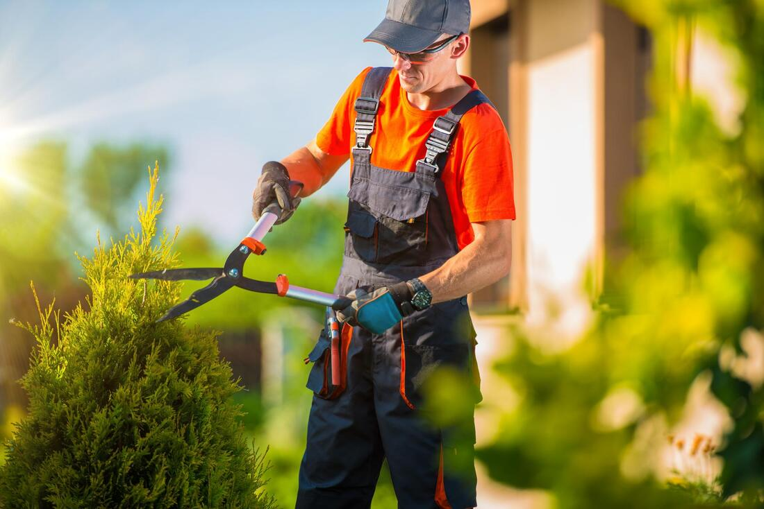 affordable tree pruning services